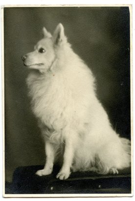 1920-spitz
